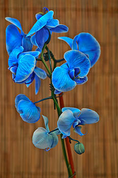 Blue Orchid by Donna Harding