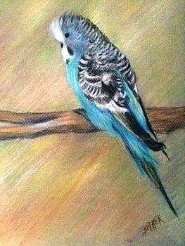 Blue Parakeet in Pastels by Joseph Baker