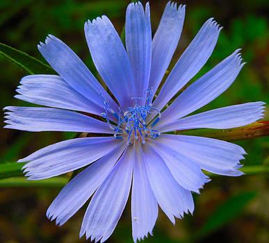 Blue Perfection by Jennifer Stone