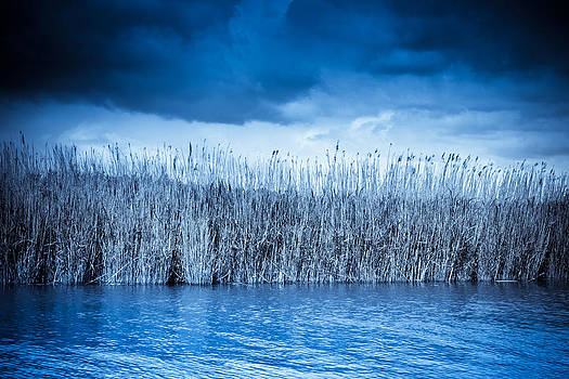 Blue Reeds by Ruth MacLeod