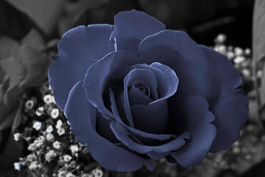 Blue Rose by Rick Mutaw
