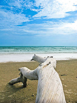 Blue sea and sky with log on the beach by Nawarat Namphon