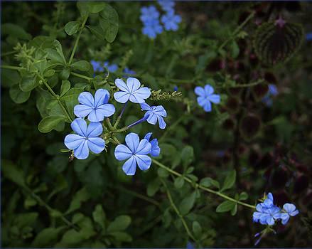 Blue Series by Barbara Middleton