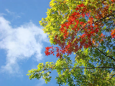Baslee Troutman - Blue Sky art prints Colorful Oak Leaves