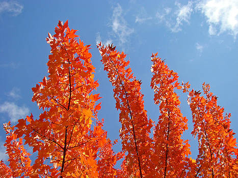 Baslee Troutman - Blue Sky art prints Orange Autumn Leaves