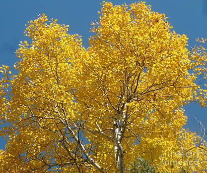 Art Studio - Blue Sky in Autumn
