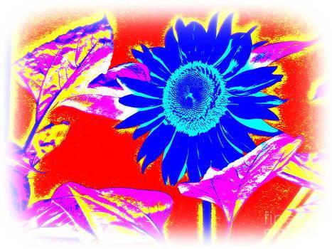 Pauli Hyvonen - Blue Sunflower