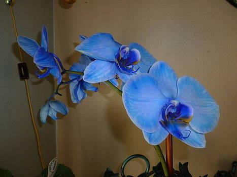 Blue wihispers by Erin Jakubowski