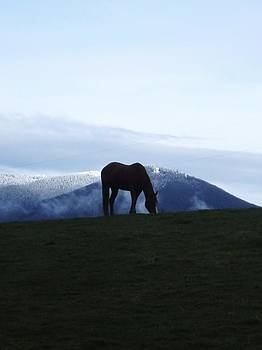 Blue Winter Morning by Alyssa St Clair