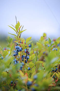 Blueberry Sky by Catherine Cirone