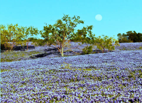 Bluebonnet Moon by Elizabeth Hart