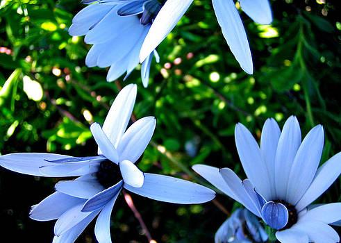 HweeYen Ong - Bluey Twinkles