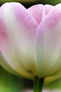 Christine Belt - Blushing in Petals