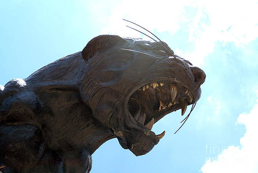 BOA Stadium Panther by Clear Sky Images
