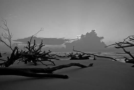 Bone Yard by Francis Trudeau