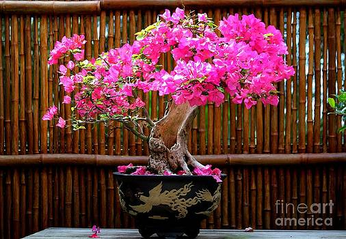 Bonsai Bougainvillea by Theresa Willingham