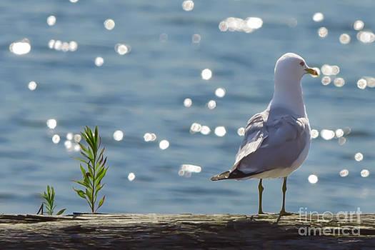 Bonsai Seagull by Paul Grande