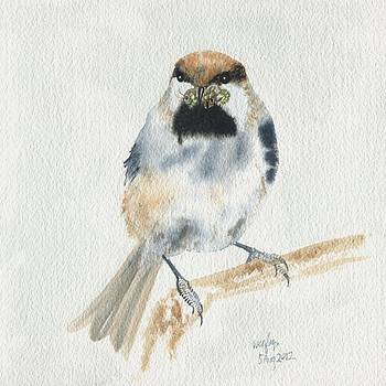 Boreal chickadee by Wenfei Tong