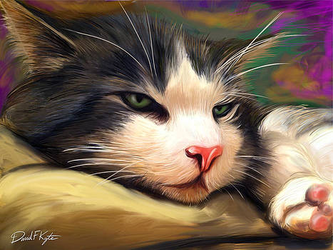 Bored Cat by David Kyte