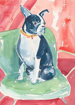 Boston Terrier by Rachel Dutton