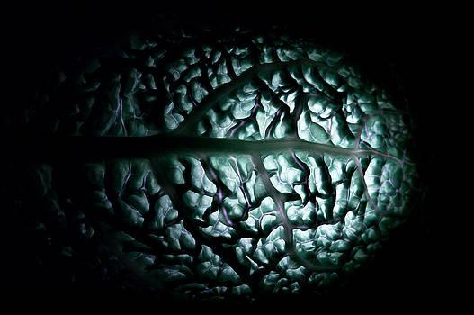 Brain by Daniel Kulinski