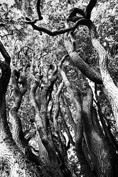 Branches by Falko Follert