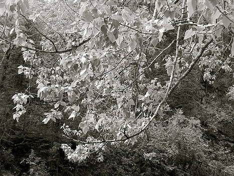Branches by Heather  Hubb