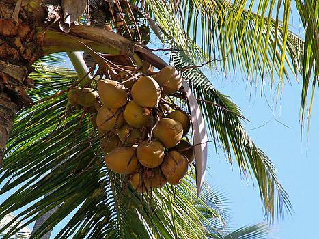 Brazil Nuts by Fredrik Ryden