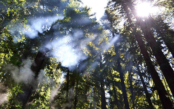 Matt Hanson - Breaking Through the Trees
