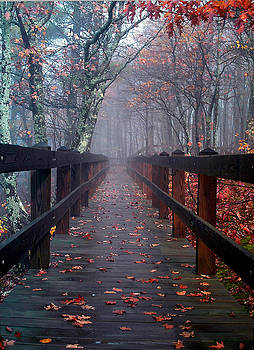 Bridge To Mist Woods by Mike Hainstock