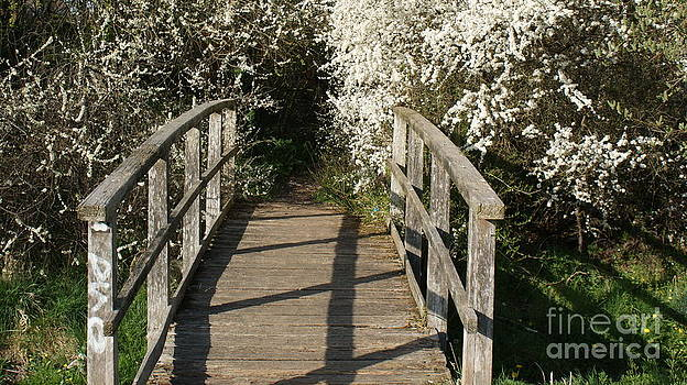 Bridge To Where by Robert Mccarthy
