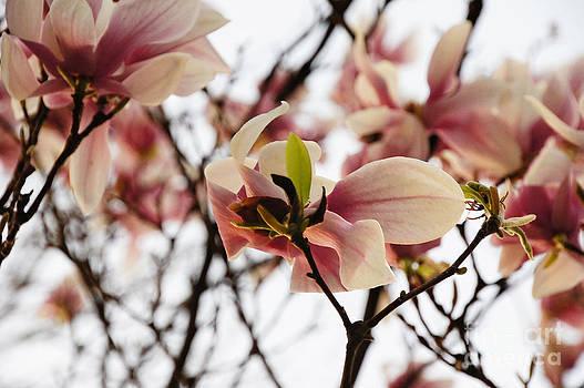 Brief Blossom by Diane Stresing
