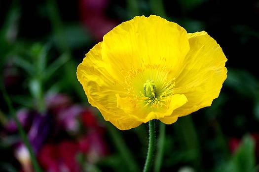 Karen Scovill - Brigh Yellow
