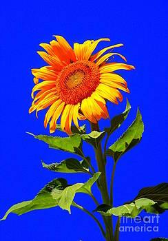 Patrick Witz - Bright Sunflower