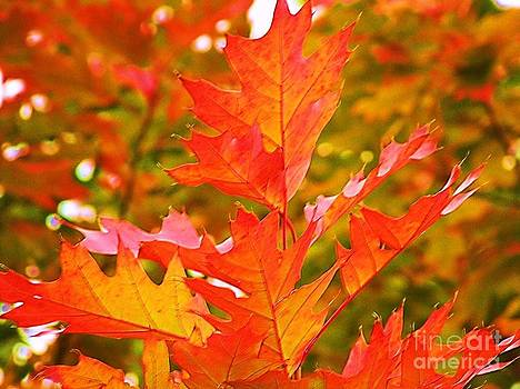 Brilliant Red Oak Leaves by Donna Parlow
