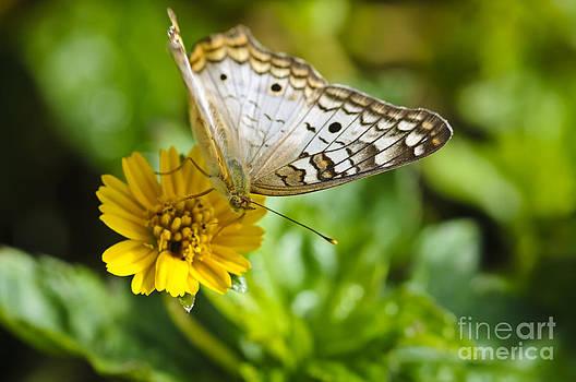 Christine Kapler - Bringing the sunshine...a butterfly