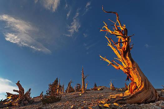 Bristlecone First Light by Nolan Nitschke