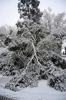 Rachael Shaw - Broken Tree
