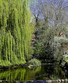 Brompton Beck by Barry Hayton