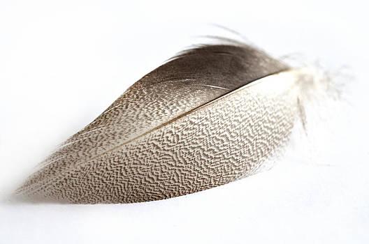 Steve Purnell - Bronze Mallard Feather