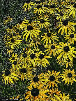 Brown Eyed Susans by Robert Goudreau