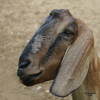 Brown Goat by Larry Small