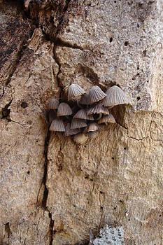 Brown Mini Mushrooms by Koral Garcia