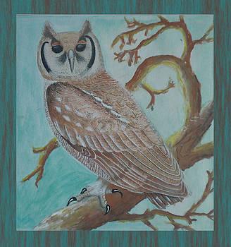 Brown Owl by Shahid altaf Shayaf