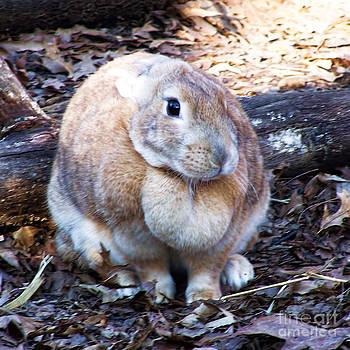 Anne Ferguson - Brown Rabbit