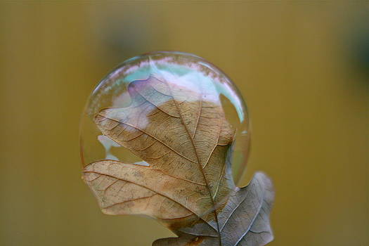 Bubble by Debbie Sikes