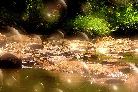 Darlene Bell - Bubbling Brook