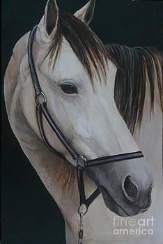 Buck Skin Horse Portrait by Charlotte Yealey