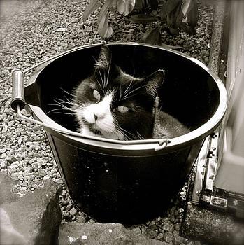 Bucket Head by John O Doherty
