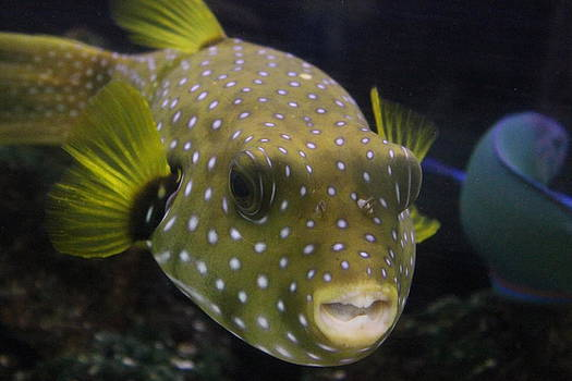 Bucky the tropical fish by Ralph Hecht